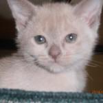 Nikita lilac boy